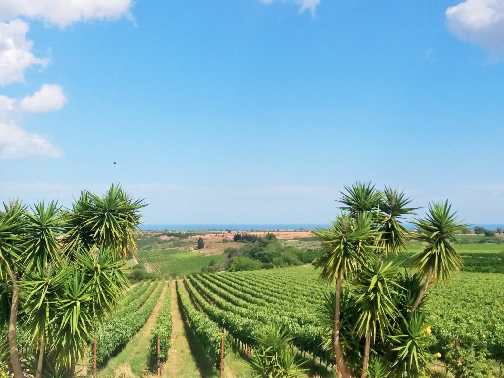 Guida ai vini della D.O.C. Matera. I vini della Capitale Europea della Cultrura 2019. Guida di Matera